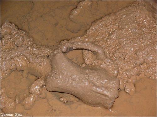 Höhlenbär 2