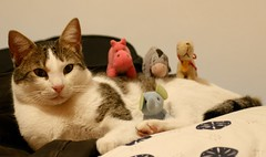 Toys attack (vic_206) Tags: pet cat canon toys chats funny chat gato mascota muñecos dinky peluches divertido catnipaddicts