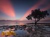 Microtel Puerto Princesa Mangrove Morning