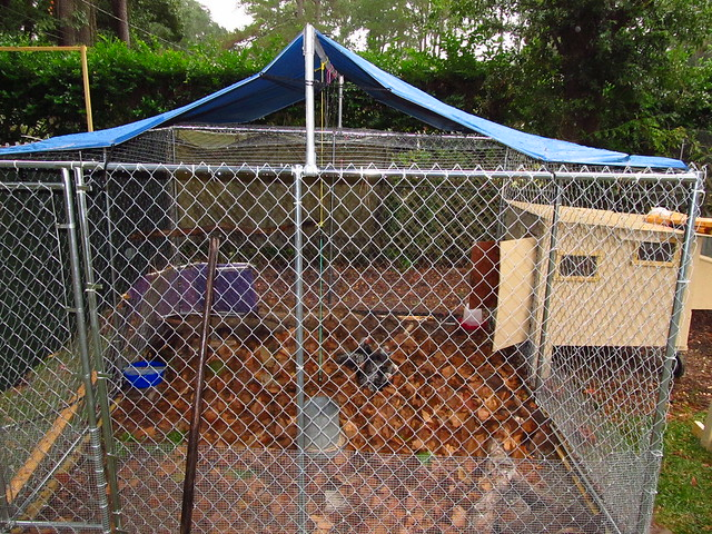 Chain Link Dog Kennel For Chicken Run Enclosure