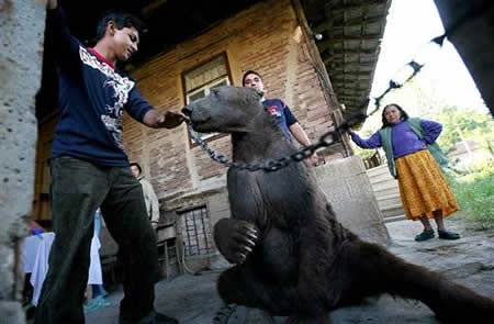 Dancing Bears Freed