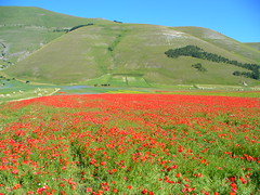 Castelluccio - by pizzodisevo (first of all, my health)