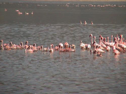 LB Flamingos Closer