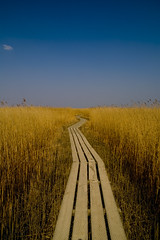 Path (Jos Mecklenfeld) Tags: reed nature path pad groningen riet 10faves nieuwstatenzijl aplusphoto diamondclassphotographer superhearts josmecklenfeld