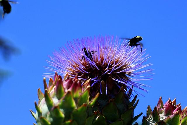 Honeybee Arrivals