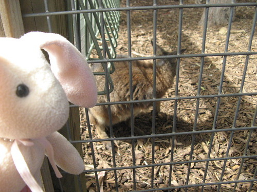 http://farm2.static.flickr.com/1062/1334196703_37aa1513d0.jpg