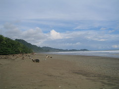 Dominical Beach
