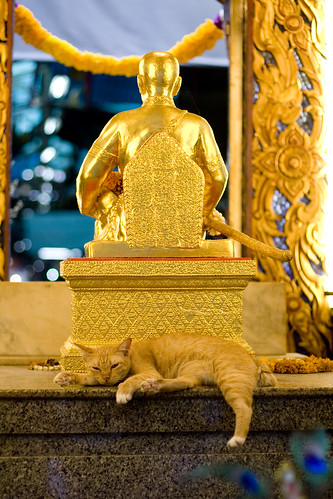 cat in the shrine