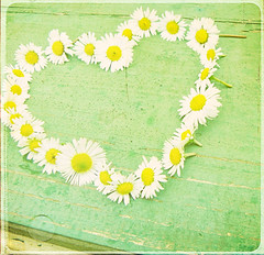 summer love (sma_kee) Tags: wood flowers summer texture love colors daisies vintage spring paint heart daisy simple summerlove whiteflowers vintagetones daisyheart