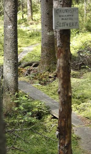 Willoughby Bog Hike (35)