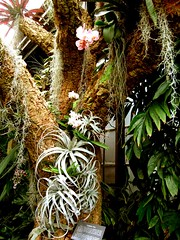 The Tree Bedecked (curious_spider) Tags: green wet botanical rainforest pretty greenhouse jungle tropical lush longwoodgardens thick damp humid moist