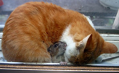 cat and mouse friendship