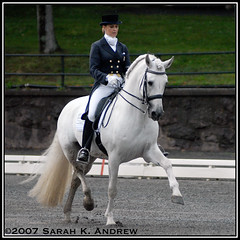 Kristina Harrison-Naness and Rociero XV (Rock and Racehorses) Tags: grey grandprix gladstone stallion andalusian dressage rocieroxv