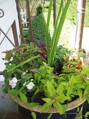 front step planter