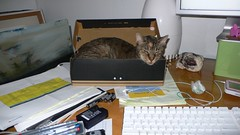 Chesterfield, sleeping in a shoebox.