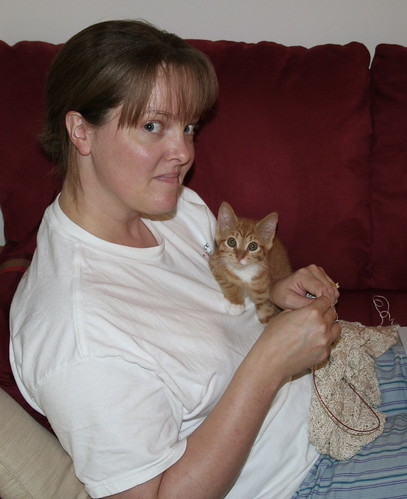 Milo's a sweet knittin' kitten