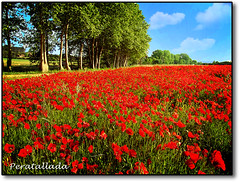 Peratallada (by onnoth) Tags: red nature landscape rojo postcard sony paisaje girona vermell postal costabrava amapolas peratallada baixempord rosselles paisatje onnoth