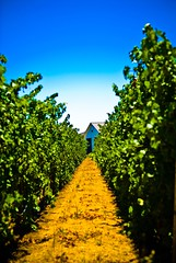 A pathway to Robert Young Vineyards? - by star5112