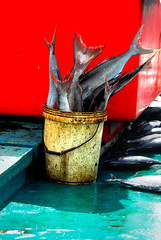 Bucket of Fish - by thew...g