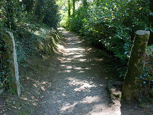 Sun Dappled Path