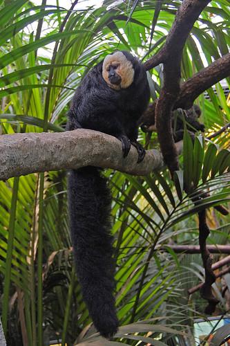 """Monkey in the """"childrens rainforest"""" at Skansen Aquarium"""