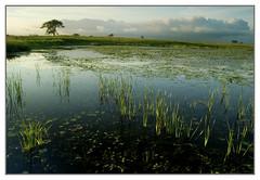 (baldwinm16) Tags: sunset nature illinois prairie springbrook springbrookprairie crookedslough