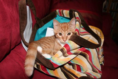 More bag nesting