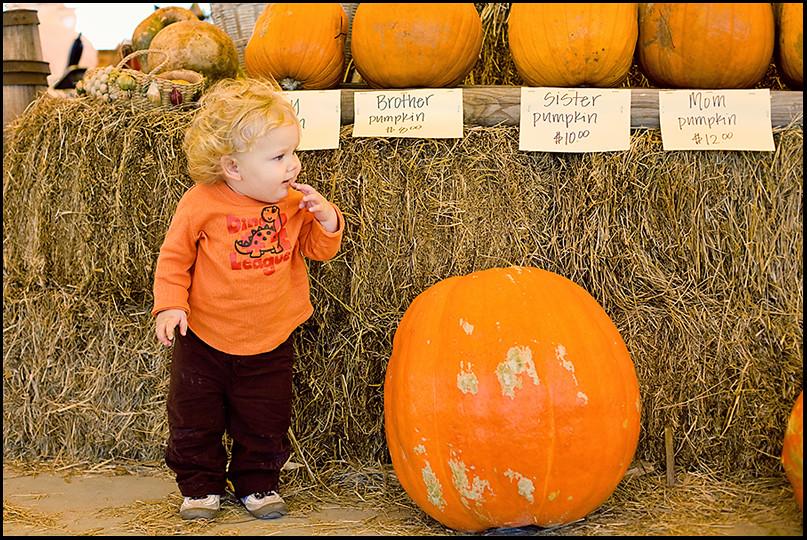 wspumpkin (4 of 8)