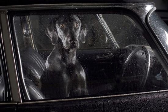dogscar8-550x367