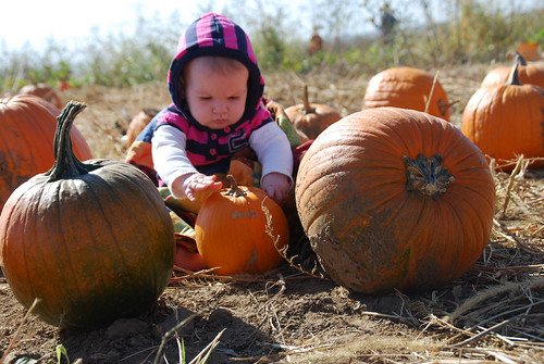 Annaliese in the pumpkins