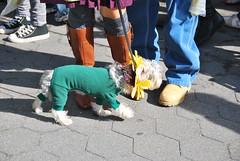 Flower Dog (thoth1618) Tags: nyc newyorkcity costumes dog pet pets ny newyork halloween animal animals brooklyn costume october brooklynheights brooklynheightspromenade parade promenade gothamist halloweenparade 2010 howloween brooklynpromenade brooklynny dogparade dogcostumes dogcostume dogincostume brooklynusa muttsquerade petsincostume dogincostumes brooklynheightsblog 103010 petincostume animalsincostumes animalincostume halloween2010 october302010 perfectpawsinc the8thannualhowloweenmuttsqueradeparade