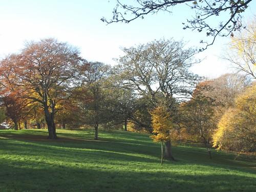 Backhouse Park in autumn