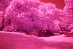 Red Vale (Adam_T4) Tags: nyc pink red ir centralpark tranquility explore dreams disposable optikverve hoyar72 384