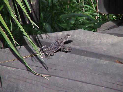 Mara Safari Club Lizard
