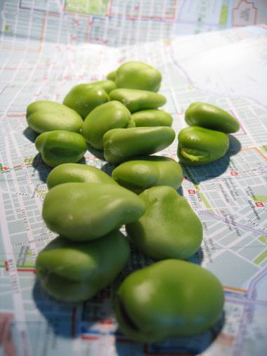Bondbönor Fava beans