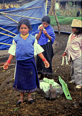 Carabuela weaving village. (Linda DV) Tags: travel people cute southamerica barn children geotagged handicraft kid ecuador child 1987 young culture scan clothes kind criana tribe ethnic minority enfant nio canoscan tribo stam artesania otavalo handwerk slidescan ethnology dziecko tribu artisanat bambino stamm    lapsi  copil dijete trib  dt trib  heimo  geomapped stamme  carabuela pokolenia minorit  minderheid  lindadevolder  plemena pokolen