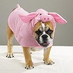 Even if you dress a dog as a pig, it is still a dog