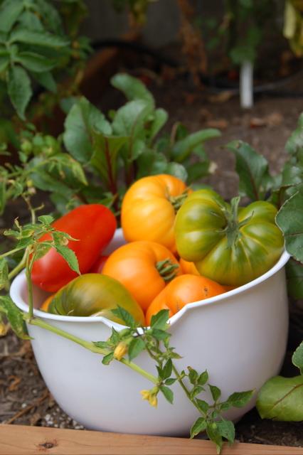 090407_tomatoes_426x640