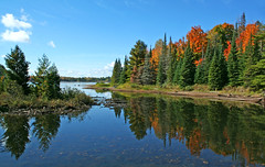 My Happy Place (nature55) Tags: autumn trees lake fall nature water wisconsin outdoors day mercer clear clearday naturesfinest turtleflambeauflowage nature55 superbmasterpiece natresfinest diamondclassphotographer flickrdiamond fishermanslanding 346explorepages wtmwgroupiconwinner regionwide