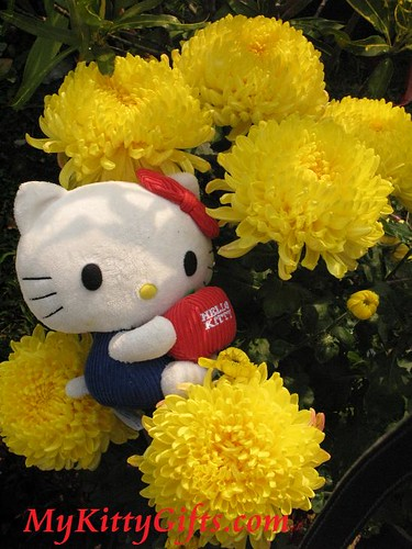Hello Kitty's View of Large Yellow Chrysanthemum in Hong Kong Orchid Trip