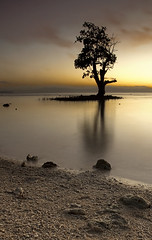 solitary (anthonyserafin) Tags: morning light sea shells seascape tree nature yellow backlight sunrise canon lens landscape gold sand rocks stones wide hues zen bliss 1740 potofgold greatphotographers landscapedreams 5dmk2 silhouttel