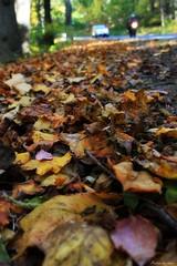 Fall Drive (J. Sibiga Photography) Tags: nature leaves vehicles skylinedrive shenandoahnationalpark motorists