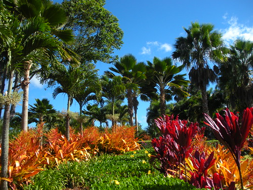 Palms and Colorful Plants