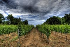 Vignoble... (Hotel Lyric [off]) Tags: vines vignes vignoble hdr ardche 400d hdrenfrancais