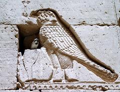 Protección_02 (Bellwizard) Tags: aves pájaros horus egipto egipte pardal ocells gorrión halcón falcó