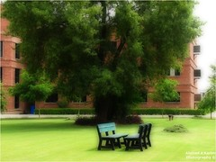 After the rain... (Ahmad A Karim) Tags: tree memories lawn nostalgia sigh benches m4 thetree lums malehostels