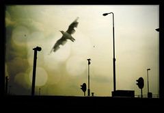 no traffic today (Paul Petruck) Tags: silhouette seagull experiment surreal notraffic superaplus aplusphoto superhearts ijsselsea sailingonthejade aphotocontest32