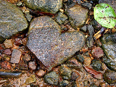 """Well, some hearts are made of stone, after all"" (Felix Francis) Tags: india love nature rock stone heart hard kerala tribals nilambur"