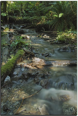 Forest stream (janusz l) Tags: canada forest geotagged westcoast soe kanada naturesfinest bridalfalls janusz leszczynski supershot shieldofexcellence anawesomeshot geo:lat=49189305 geo:lon=121727958