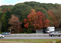 DSC_0128 roadside trees (rdmsf) Tags: road trees colors leaves boston foliage traffice sfchronicle96hours photographedbyrobertmiller rdmsf